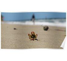 Beach Blossum II Poster
