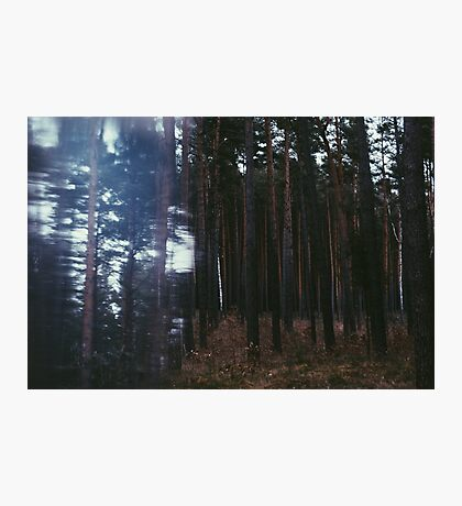 Distorted Woodland Photographic Print