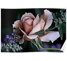 'Julia's Rose & Nepeta...' Poster