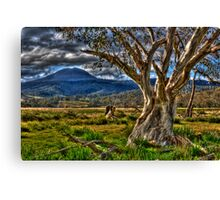 Still Onetree Canvas Print