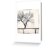 Orvieto Tree Greeting Card
