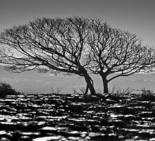 Newbiggin Crags 06 - Lone Tree & Limestone Pavement, Cumbria by Simon Lupton