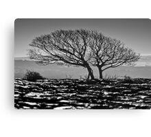 Newbiggin Crags 06 - Lone Tree & Limestone Pavement, Cumbria Canvas Print
