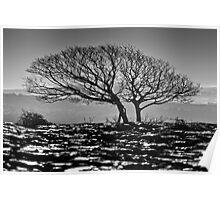 Newbiggin Crags 06 - Lone Tree & Limestone Pavement, Cumbria Poster
