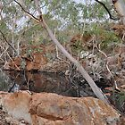 Outback waterways holding on by Bearfoote