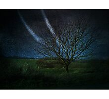 Tree@Night Photographic Print