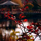 Japanese garden by guanabanana