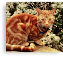 Ginger Tabby Cat Canvas Print