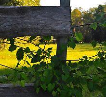 Ivy on Fence by joevoz