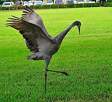 Sandhill Crane Flapping Wings by joevoz