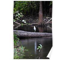 Egret on Tree Poster