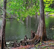 Cypress Swamp by joevoz