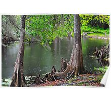 Cypress Swamp Poster