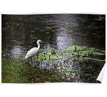 Egret on a Fishing Trip Poster