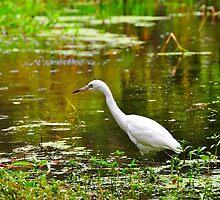Egret  by joevoz