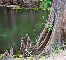 Cypress Tree Stump by joevoz