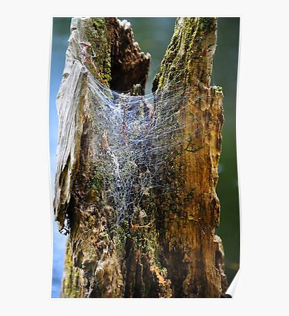 Cypress Tree Stump with Spider's Web Poster