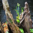 Plant Among Cypress Knees  by joevoz