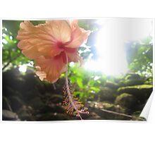 Heavenly Flower Poster