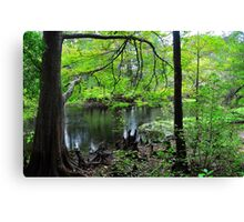 Swamp of Cypress Trees Canvas Print