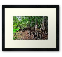 Cypress Forest Framed Print