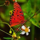 Butterfly on Flower by joevoz