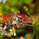 Small Orange Butterfly by joevoz