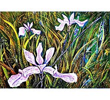 Irises Photographic Print