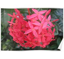 Nature's Bouquet! Poster