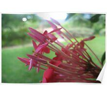 Nature's Bouquet, Deux! Poster
