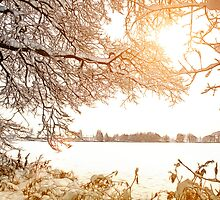 View From Ruff Wood - Ormskirk Snow Scene by Liam Liberty