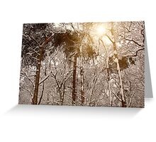 Winter Trees in Ruff Wood Greeting Card