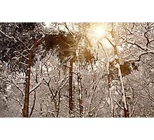 Winter Trees in Ruff Wood Photographic Print