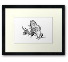 Gazing Butterfly Framed Print