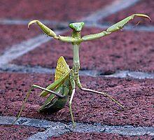 Kung Fu Mantis by ZenCowboy