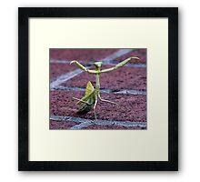 Kung Fu Mantis Framed Print