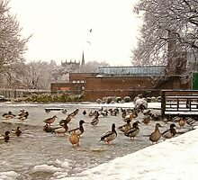 Frozen Coronation Park Lake - Ormskirk by Liam Liberty