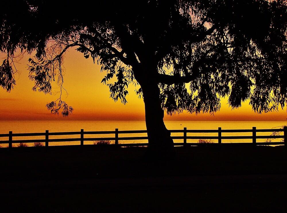 Tree Silhouette by Harlan Mayor