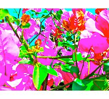 Abstracted Bougainvillea Photographic Print