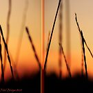 Whispers (Diptych) by rocamiadesign