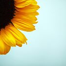 Sunflower by lorrainem