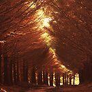December II by Matthew Pugh