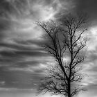Tree and Sky by JMontrell