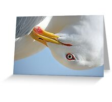 Seagull head Greeting Card