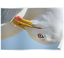 Seagull head Poster