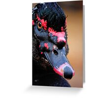 Muscovy black duck Greeting Card
