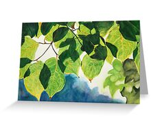 Sunlight through the Leaves of a Tree Greeting Card