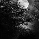 Full Moon by Rozalia Toth