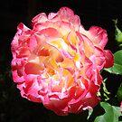 Rose Flower Art Print Big Pink Roses Floral by BasleeArtPrints
