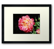 Rose Flower Art Print Big Pink Roses Floral Framed Print
